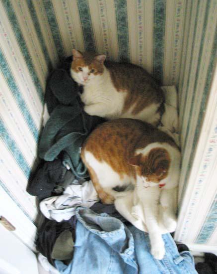 Egregious cat abuse photos | domesticat net